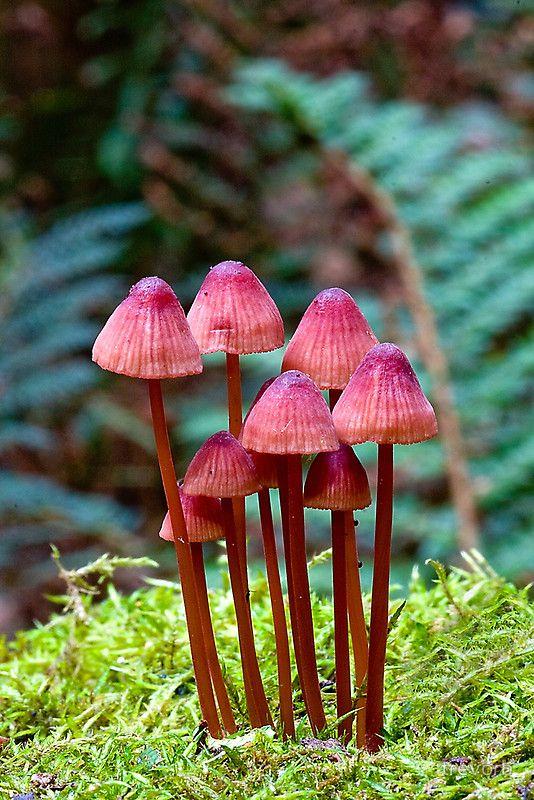 Mushrooms..