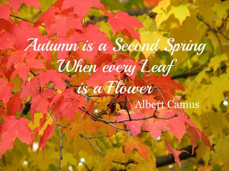 Fall Quotes: 14 Inspirational Autumn Sayings