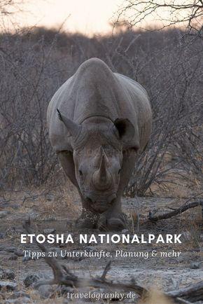 Safari im Etosha Nationalpark – ein Überblick