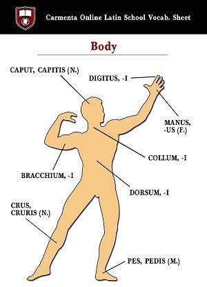CORPUS, -ORIS (vía Latin Tutors | Carmenta Online PhD Tutors | Free Vocab Sheets)