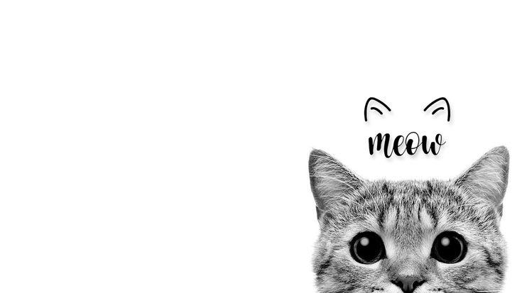 Cat Desktop Wallpaper 1366x768 Cute Desktop Wallpaper Desktop Wallpaper Art Wallpaper Dekstop
