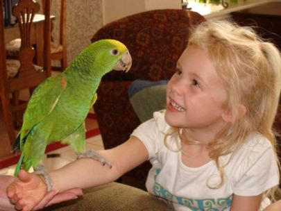 Top 10 Reasons Why It Rocks To Have A Pet Parrot