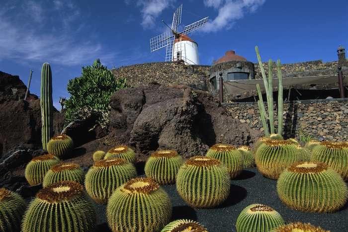 The unique cactus gardens of #Lanzarote