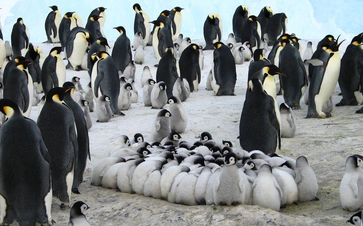 Expedición a la Antártida | 14 al 22 de Diciembre