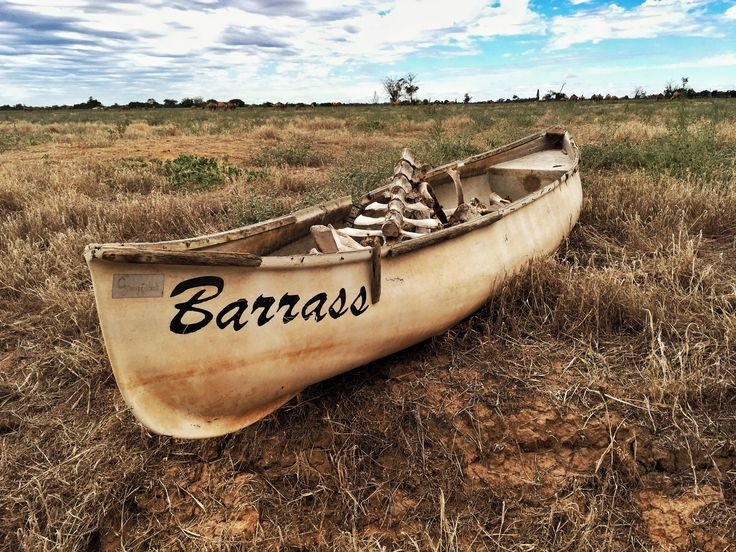 Bleaches bones in a beaches boat...cleaning out the paddock we found an old canoe filled with cow bones. #canoe #bones #weather