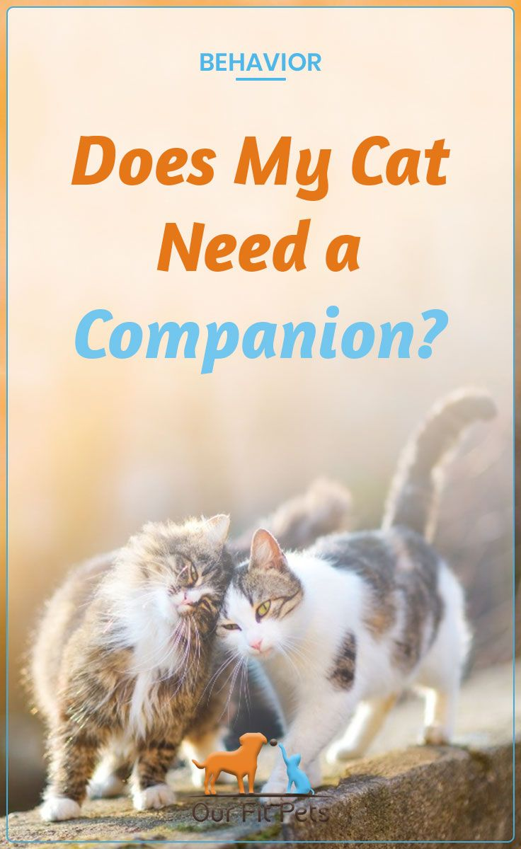 Does My Cat Need A Companion Our Fit Pets Cat Advice Cats Getting A Kitten