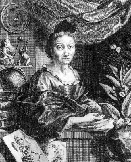 Portrait of Maria Sibylla Merian - an engraving by Jacobus Houbraken