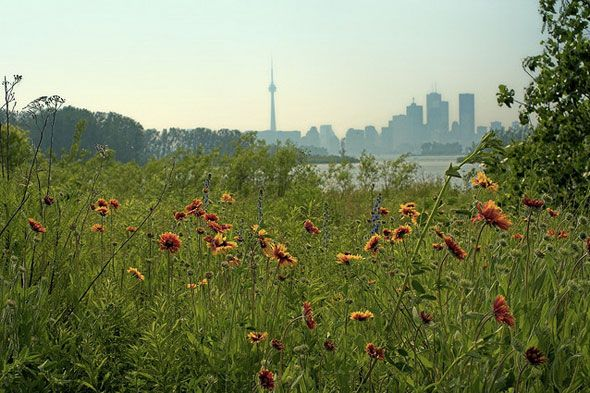 If you're pining for trees and a true escape in the city, Leslie Street Spit is it.