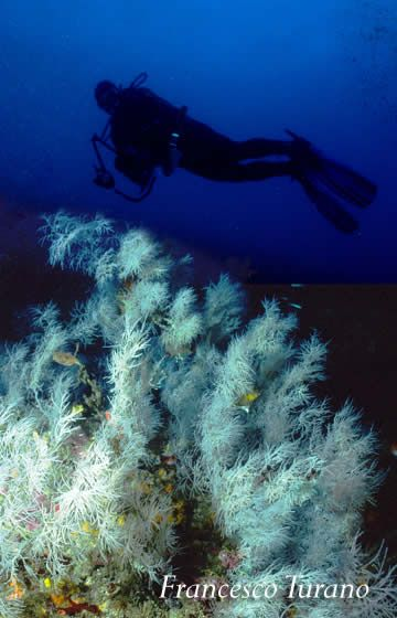 Go scuba diving by the Black coral recently discovered in Scilla