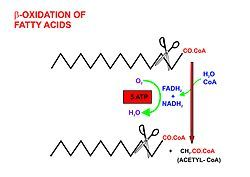 Fatty acid metabolism. From Wikipedia, the free encyclopedia.