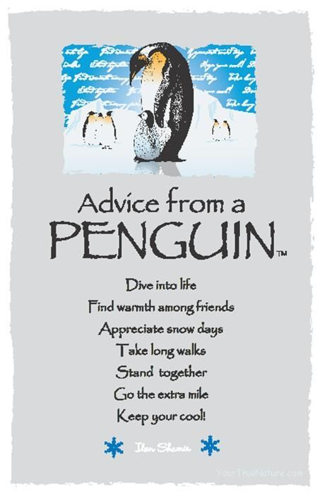 ☆ Advice From a Penguin ~:By Ilan Shamir ☆