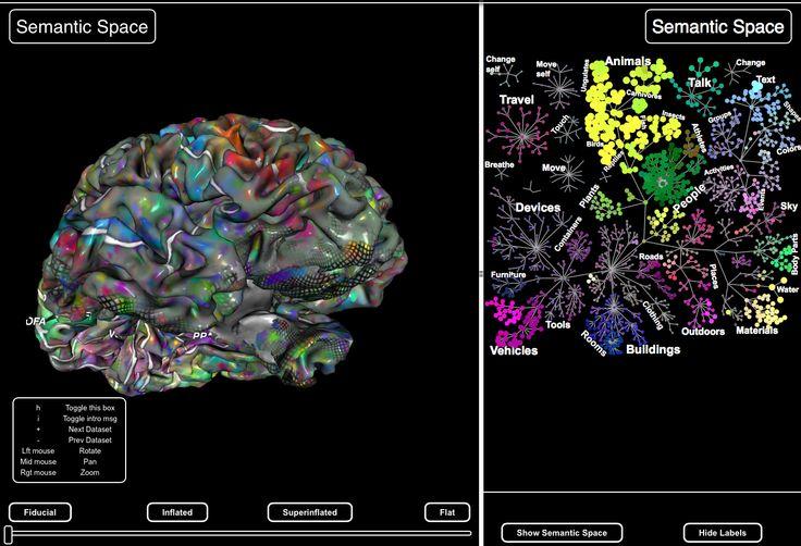 interactive // a semantic map of human brain