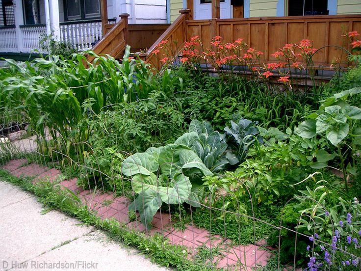 Front Yard Edible Garden Ideas 593 best urban gardening images on pinterest   urban gardening