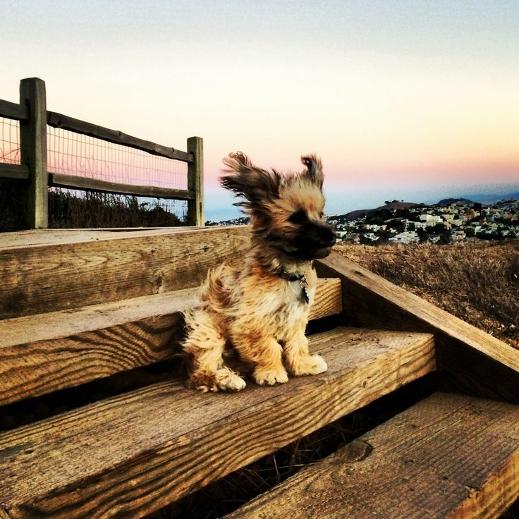 Sea Breeze.
