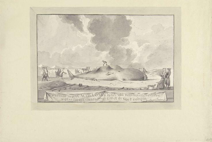Walvis tussen Zandvoort en Wijk aan Zee aangespoeld, 1762, Jacobus Luberti Augustini, 1762