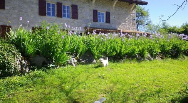 Chambre d hôtes La Haie Fleurie - #BedandBreakfasts - $69 - #Hotels #France #Chevillard http://www.justigo.co.in/hotels/france/chevillard/chambre-d-ha-tes-la-haie-feurie_52725.html