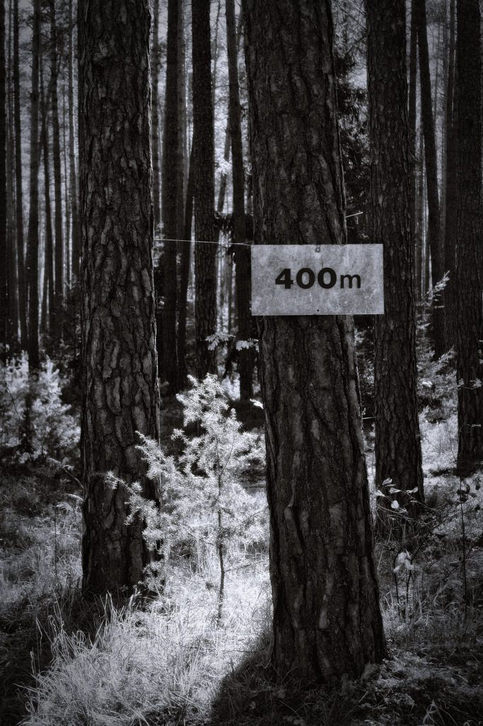 bwstock.photography  //  #400m #pine #forest