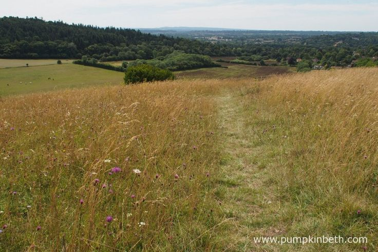 Pewley Down Nature Reserve in Guildford, an area of chalk grassland with far reaching views.