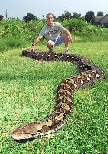Google Image Result for http://www.littlecrazymonkey.com/fun_pictures/pictures/anacondas_around_the_world.jpg