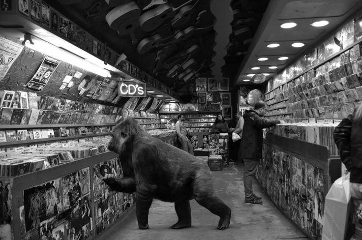 Co one tu robią? Dzikie zwierzęta na europejskich ulicach. Zobacz te surrealistyczne zdjęcia [GALERIA]