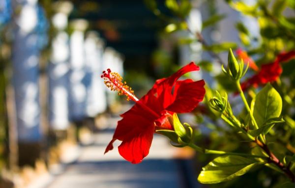 Kalithea, Rhodes Island, Dodecanese,Greece, Amazing Greece, Удивительная Греция
