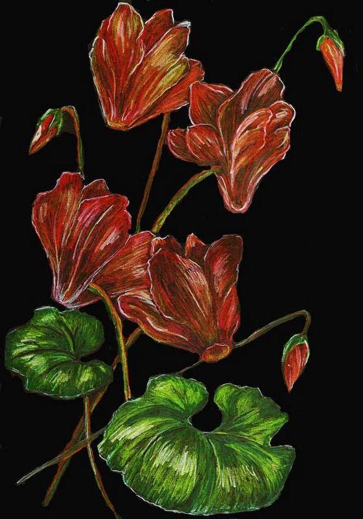 kwiaty, fiołki, kredka na czarnym kartonie