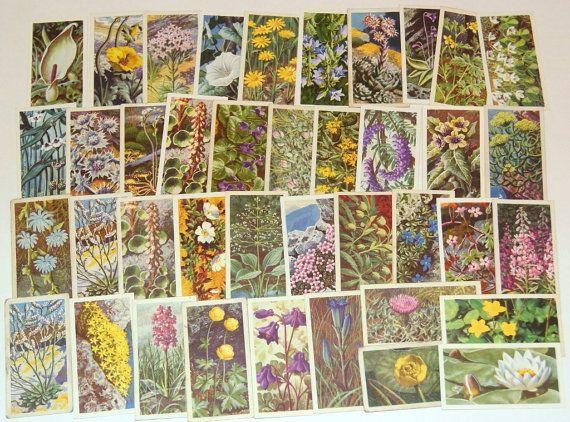 Lot of 40 Flowers Tea Cards Vintage Brooke Bond scrapbooking collage altered art crafts by scrapitsideways, $6.00