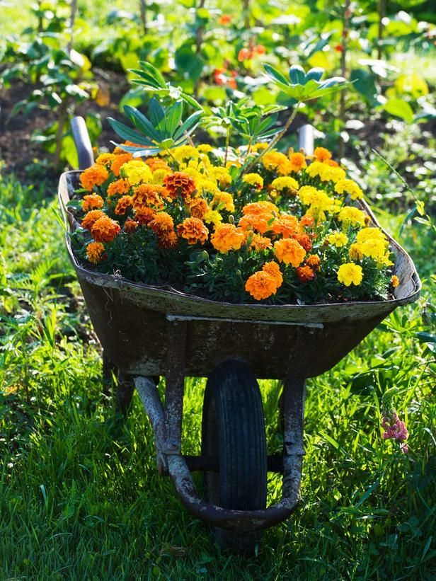 Flower Garden Ideas With Old Wheelbarrow 36 best wheelbarrows images on pinterest | wheelbarrow, gardens