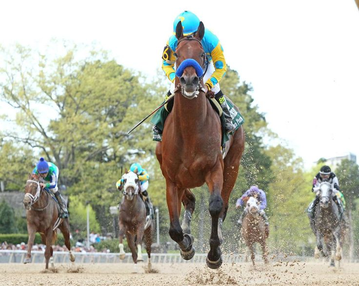 American Pharaoh winning the Arkansas Derby. (Photo credit: Coady Photography/Oaklawn)