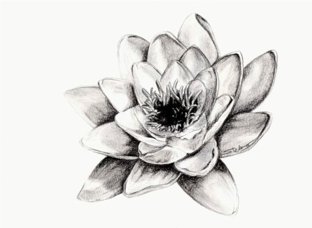 17 migliori idee su disegni a carboncino su pinterest for Disegni di fiori a matita