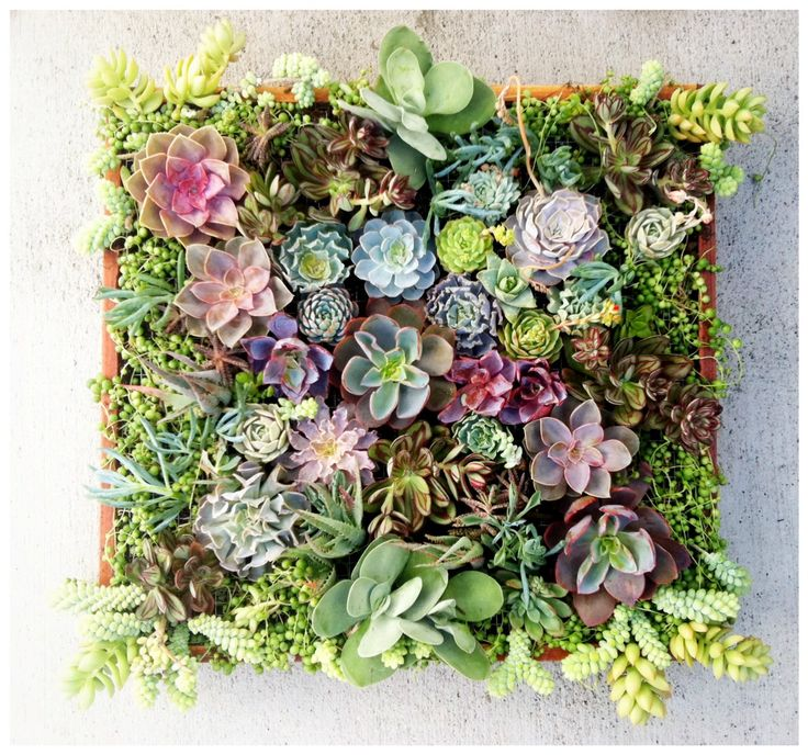 Wonderful Vertical Succulent Garden Wall I Need To Make This!