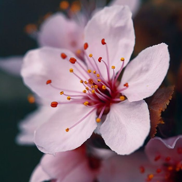 1000+ Images About Spring On Pinterest