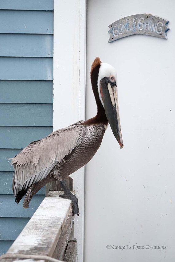 Gone Fishing Pelican Print Coastal Decor Gone Fishing Sign Amazing Gone Fishing Signs Decor