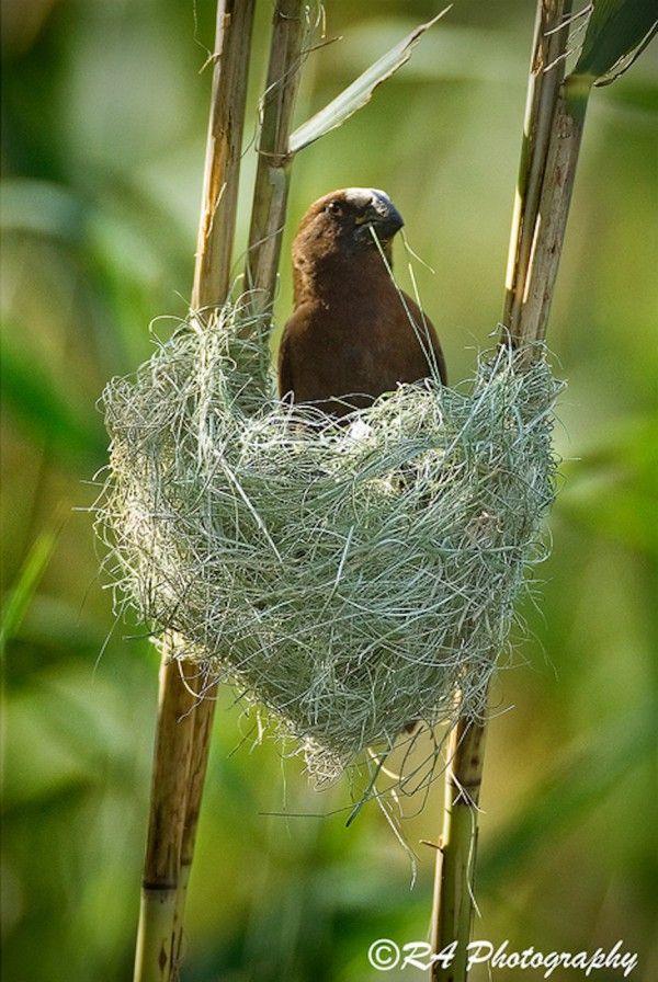 523 best birds of africa images on pinterest. Black Bedroom Furniture Sets. Home Design Ideas