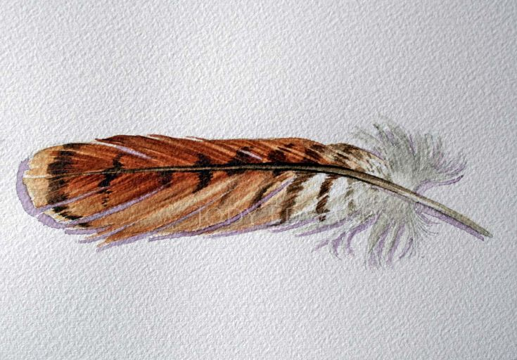 Red Tailed Hawk feather Original watercolor feather от jodyvanB