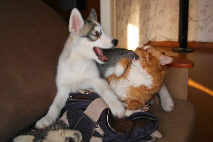 Кот Нянька. Cat sitter