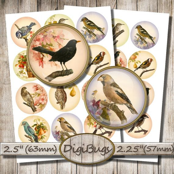 Printable Bird Images, Digital Collage Sheet, 2.5 inch & 2.25 inch Circles, Round Jewelry Images, Bird Decoupage Paper, Instant Download, a1