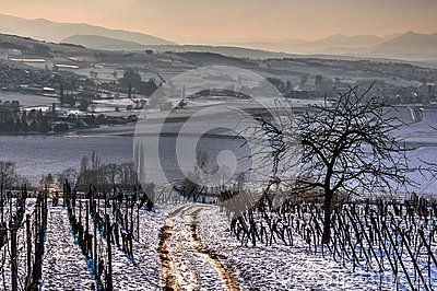 Winter scenery with walking path in the vineyards. In the background, the first hills of the Vosges mountains (Alsace, France)