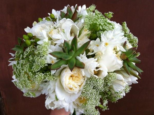 queen annes lace succulents
