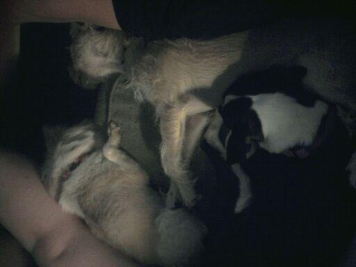 """Take a few siestas with my puppies!  """"Whoever said you can't buy happiness forgot little puppies."""" - Gene Hill"""