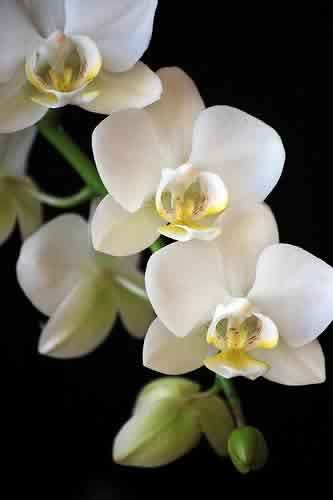 ...Orchids., Orquídeas