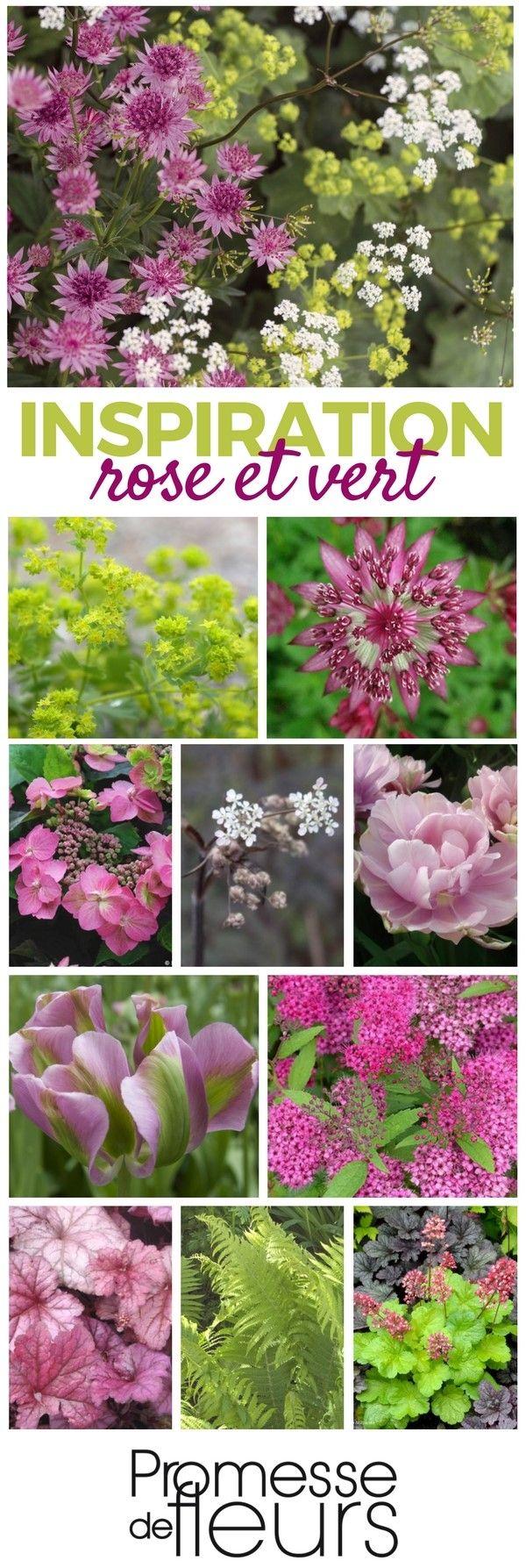 Massif de vivaces en rose et vert - Une ambiance à découvrir sur le site Promesse de Fleurs