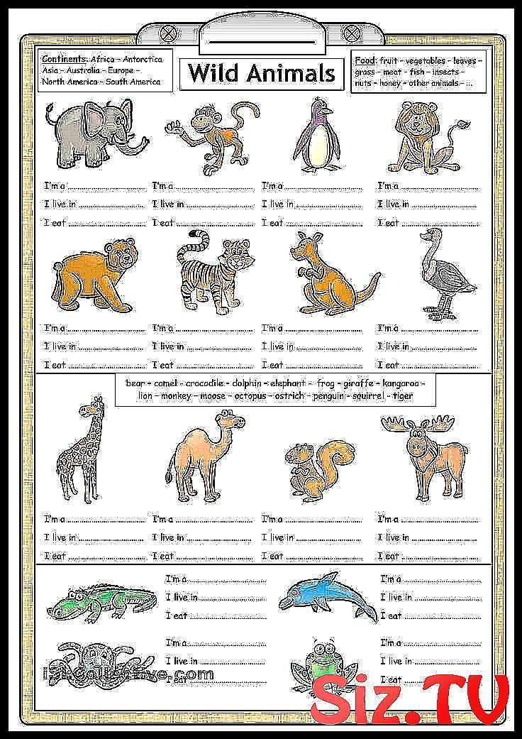 Pin On Kindergarten Language Arts Wild animals worksheets for kindergarten
