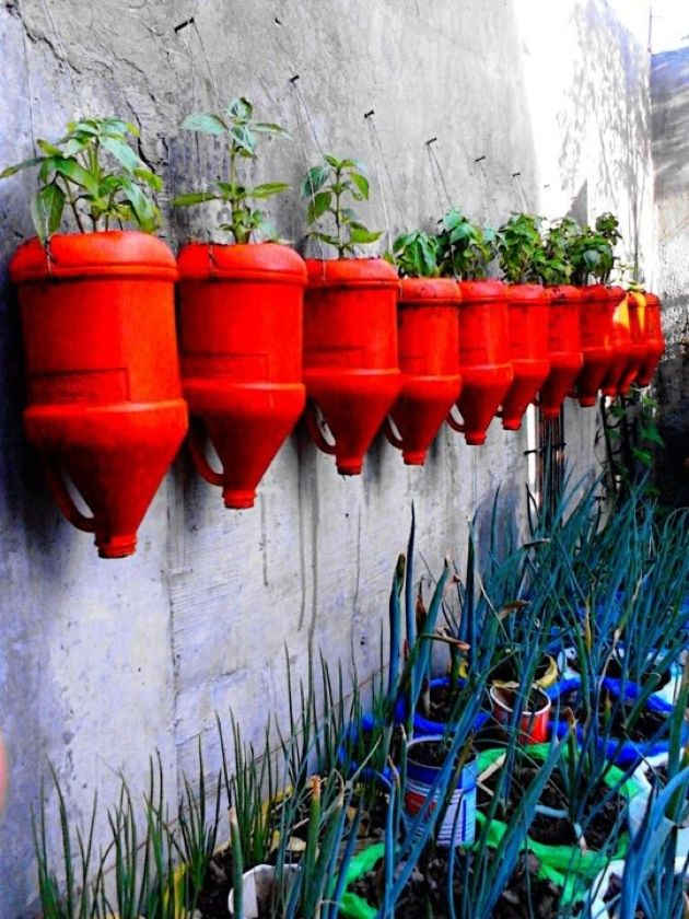 Herb wall using recycled milk jugs 42