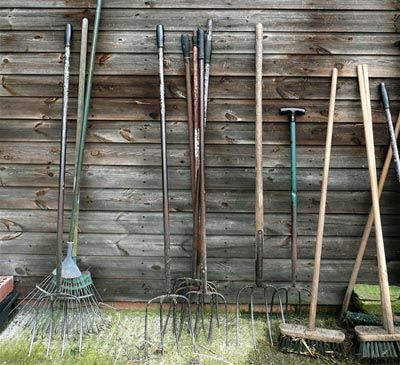 Как очистить огород от пырея - пырей, гербициды, мульчирование