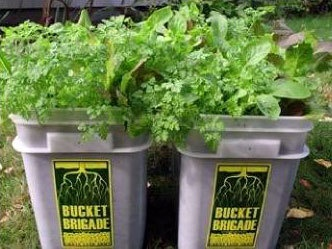 Bucket Brigade 101 (aka Giveaway Bucket Gardening) - HOMEGROWN