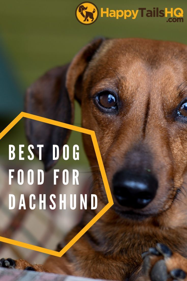 What Is The Best Dog Food For Dachshunds My 9 Top Picks Dog