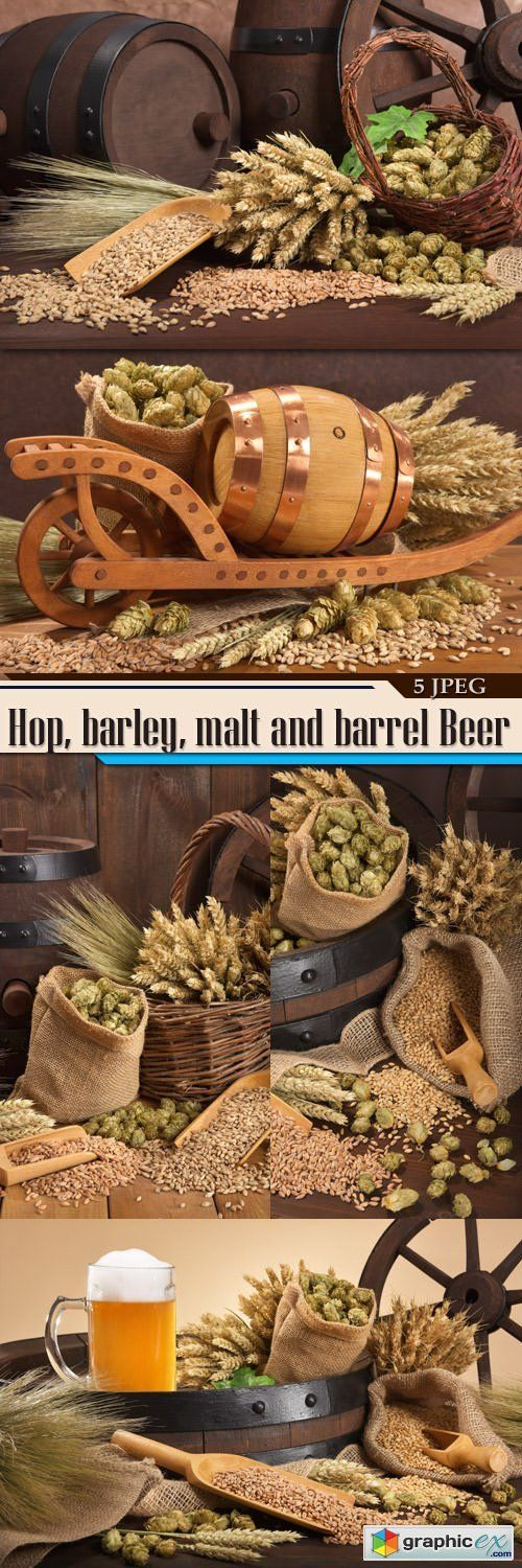 Hop barley malt and barrel Beer  stock images