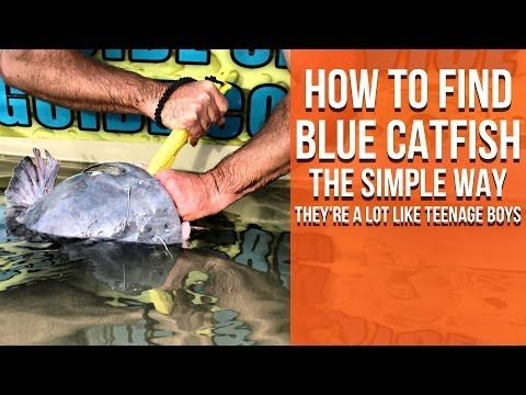 Find Blue Catfish The Simple Way (They're a LOT Like Teenage Boys) - YouTube