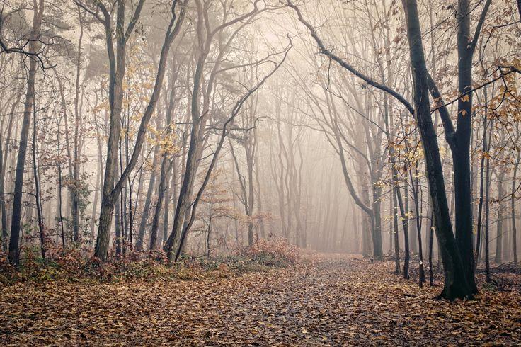 Sleepy Forest of Merode by Geoffrey Van Beylen on 500px